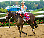 OCTOBER 7, 2018 : Brucia La Terra in the Frizette Stakes at Belmont Park on October 6, 2018 in Elmont, NY.  Sue Kawczynski/ESW/CSM