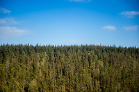 General view of evergreen trees from the top of the of the  'sugar loaf' Powys, Wales, UK