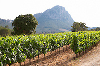 The Pic St Loup mountain top peak. Pic St Loup. Languedoc. France. Europe. Vineyard.