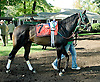Wild Bout Tiffany before The Endine Stakes at Delaware Park on 10/13/12