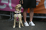 Even the dog needs a pass at sign on before the start of Stage 21 of the 2018 Giro d'Italia, running 115km around the centre of Rome, Italy. 27th May 2018.<br /> Picture: LaPresse/Fabio Ferrari | Cyclefile<br /> <br /> <br /> All photos usage must carry mandatory copyright credit (&copy; Cyclefile | LaPresse/Fabio Ferrari)