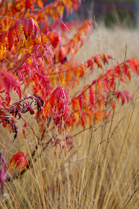 Scampston Walled Garden (28th October 2009)