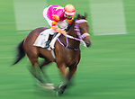 Horse Top Beautiful #11 ridden by Joao Moreira competes during the race 9 of HKJC Horse Racing 2017-18 at the Sha Tin Racecourse on 16 September 2017 in Hong Kong, China. Photo by Victor Fraile / Power Sport Images