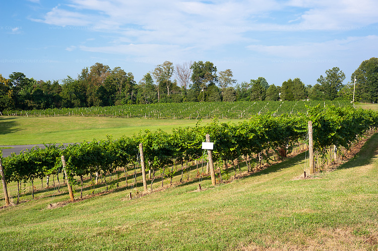 From the parking lot, one can view attractive, landscaped lawns and neat vineyards at Prince Michel Vineyard and Winery.