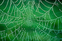 Spider web covered with dew.