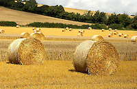 Round straw bales in Hampshire.
