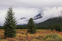 Evergreen trees and clouds in Banff National Park
