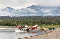 A family of brown bears walks along the shore of Naknek Lake by a float plane, Katmai National Park, Alaska.