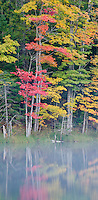 Maples trees on the shoreline reflect autumn color into Council Lake in the Hiawatha National Forest, Alger County, Michigan