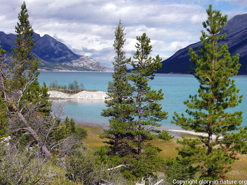Beautiful vantage of Abraham Lake, west of Nordegg, Alberta.