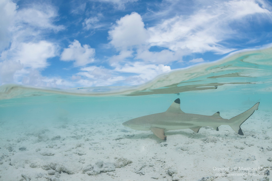 blacktip-reef-shark-over-under037258 jpg | Matthew Meier