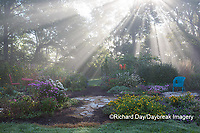 63821-23716 Sun rays in fog in flower garden, Marion Co., IL