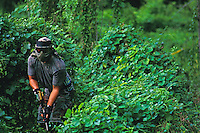 Man engaged in paintball sport, a paramilitary leisure type game