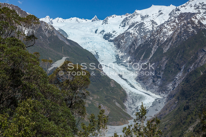 View of Fox Glacier through native bush - on a blue sky day, South Westland, South Island, New Zealand - stock photo, canvas, fine art print