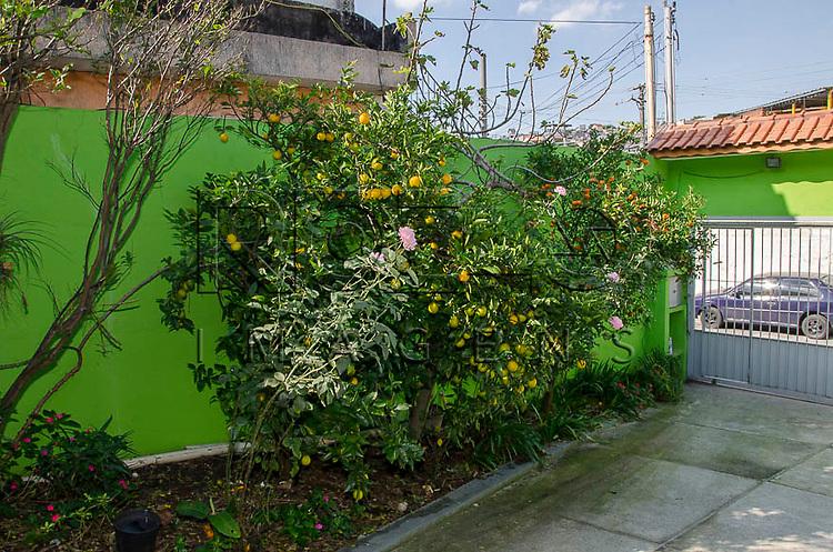 Quintal com pés de frutas orgânicas, laranja e mexerica, São Paulo - SP, 05/2015