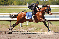 #28Fasig-Tipton Florida Sale,Under Tack Show. Palm Meadows Florida 03-23-2012 Arron Haggart/Eclipse Sportswire.