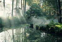 Saihoji garden photos