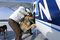 Veterinarian Julie Kittams loads a dropped dog onto a plane in Shageluk on Saturday March 9, 2013...Iditarod Sled Dog Race 2013..Photo by Jeff Schultz copyright 2013 DO NOT REPRODUCE WITHOUT PERMISSION