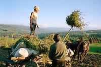 ROMANIA / Maramures / Sarbi / October 2006..The potato harvest in this small village in the Cosau valley...© Davin Ellicson / Anzenberger