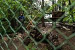 By this calm, the polar foxes have made cubs. Due to a coronavirus pandemic (COVID-19), Servion zoo is closed to the public. Servion, Switzerland, April 30, 2020.<br /> Par ce calme, les renards polaires ont fait des petits. Pour cause de pandemie de coronavirus(COVID-19), le zoo de Servion est ferme au public. Servion, Suisse, le 30 avril 2020.