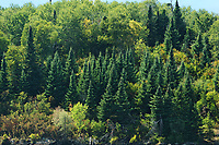Trees on Shoreline of Lake of The Woods<br />