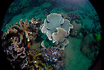 Earth- the Ocean Planet 4-30-12-359