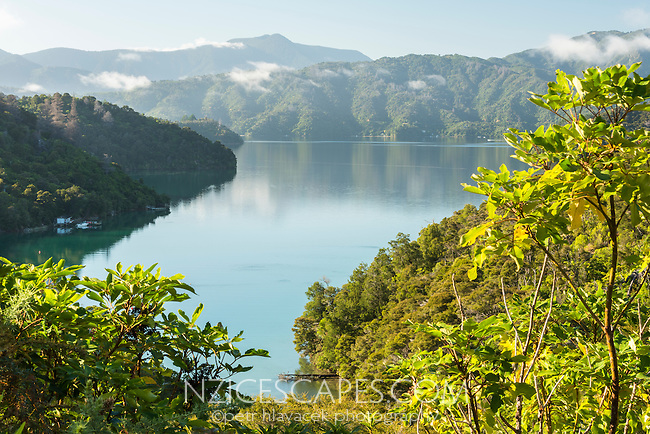 Mistletoe Bay in Marlborough Sounds, Marlborough Region, South Island, New Zealand