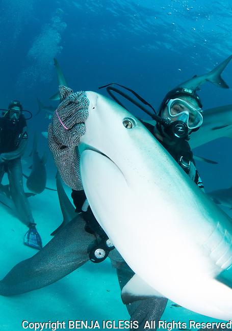 Shark Fedding frenzy Stuart Coves Nassau Bahamas