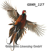 Simon, REALISTIC ANIMALS, REALISTISCHE TIERE, ANIMALES REALISTICOS, paintings+++++Card_OliviaH_FlushedPheasant,GBWR127,#a#, EVERYDAY,pheasant
