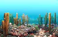 Ancient Permian Ocean