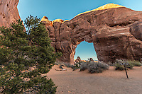Pine Tree Arch is in the Devil's Garden section of Arches National Park and is easily accessible by trail. It has a span of 45 feet and a height of 44 feet. It is named for the nearby Pinyon Pine