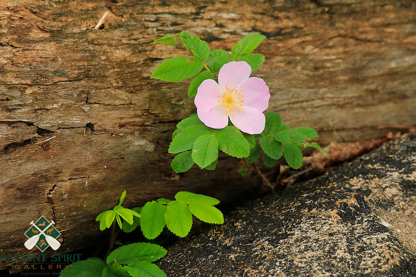 &quot;Bloom Where You're Planted&quot;<br />