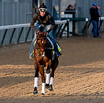 LOUISVILLE, KENTUCKY - APRIL 29: Omaha Beach, trained by Richard Mandella, exercises in preparation for the Kentucky Derby at Churchill Downs in Louisville, Kentucky on April 29, 2019. Scott Serio/Eclipse Sportswire/CSM