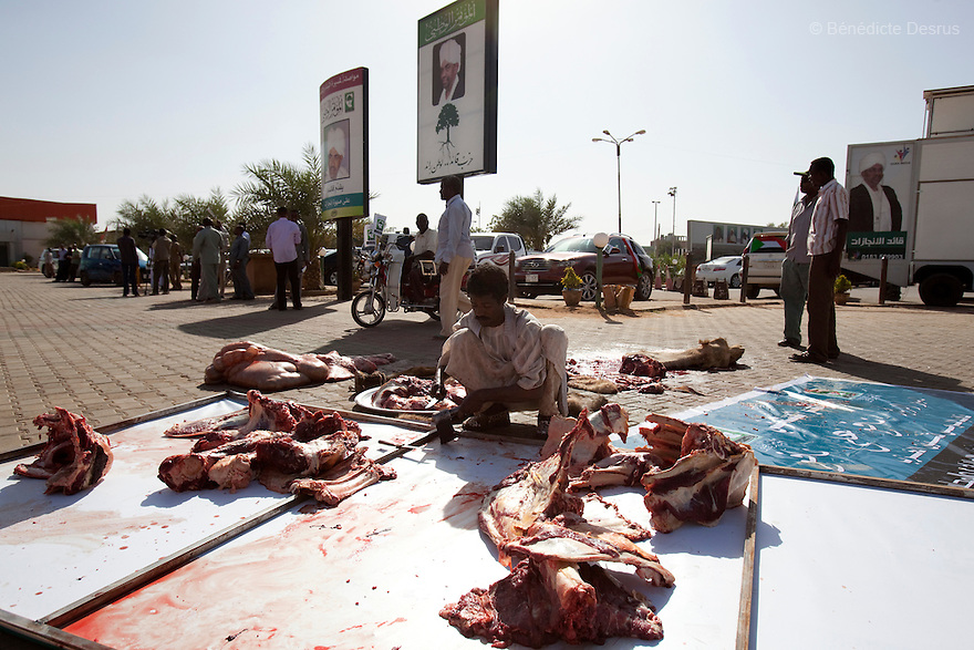 26 april 2010 - Karthoum, Sudan - A camel is slaughtered at the NCP party's Khartoum headquarters to celebrate President Omar al-Bashir wins elections. The eating of camel is allowed in Islam, and indeed is traditional in the Islamic heartland in Saudi Arabia and the Arabian Peninsula more generally. The hump in particular is considered a delicacy and eaten on special occasions, including religious festivals. Omar Al-Bashir won another term in office Monday, according to election officials, with a comfortable majority (68 percent of the vote ) in elections marred by boycotts and fraud allegations, becoming the first leader to be elected while facing an international arrest warrant for alleged crimes he orchestrated in the western region of Darfur. The elections take place as Sudan heads toward a referendum in eight months that could lead South Sudan to split off and become Africa's newest nation. Photo credit: Benedicte Desrus