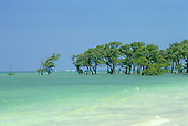 Itaparica Island, Bahia, Brazil. Blue sky, green sea, line of mangroves; waves breaking over the reef beyond.
