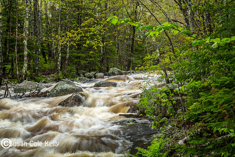 Card Mill Stream in Franklin, Maine, USA
