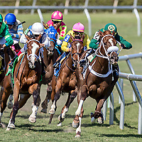 HALLANDALE BEACH, FL - MAR 3:Thewayiam #3 trained by H. Graham Motion with Jose Ortiz in the irons positions  along the rail at the final turn on the way to winning the $100,000 Herecomesthebride Stakes G3 at Gulfstream Park on March 3, 2018 in Hallandale Beach, Florida. (Photo by Bob Aaron/Eclipse Sportswire/Getty Images)