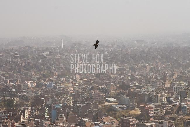 Eagle soaring high above Kathmandu viewed from the Swayambhunath (Monkey Temple), Nepal