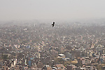 Eagle soaring high above Kathmandu viewed from the Swayambhunath (Monkey Temple), Nepal