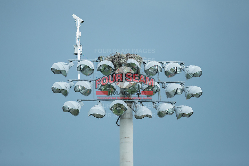 An osprey nest sits atop a light tower during the game between the Wake Forest Demon Deacons and the Florida Gators in Game Three of the Gainesville Super Regional of the 2017 College World Series at Alfred McKethan Stadium at Perry Field on June 12, 2017 in Gainesville, Florida. The Gators defeated the Demon Deacons 3-0 to advance to the College World Series in Omaha, Nebraska. (Brian Westerholt/Four Seam Images)