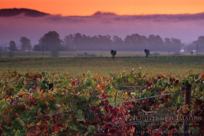 Sunrise in the Carneros Region, Napa Valley, Napa County, California