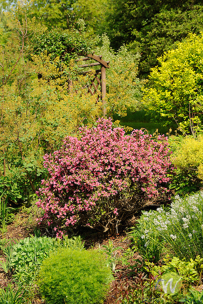 Pamela Paulhamus's Perennial Garden.