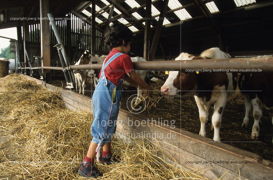 GERMANY, island Ruegen, organic farm, child feeds milk cows during vacations / DEUTSCHLAND, Bioland Betrieb Hofgut Bisdamitz auf Insel Ruegen , Rinder im Stall Kind fuettert Kuehe waehrend Hofbesichtigung