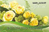 Maira, FLOWERS, BLUMEN, FLORES, photos+++++,LLPPA15197,#F#