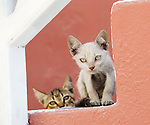 Kittens on steps in Amoudi, Santorini, Greece