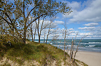 Cottonwood trees drop their leaves on the shore of Lake Michigan at the West Beach Unit of Indiana Dunes National Lakeshore, Porter County, Indiana
