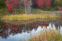Houghton County, Keweenaw Peninsula, MI<br /> Wetland marsh with grasses and forest in fall color, Copper Country State Forest