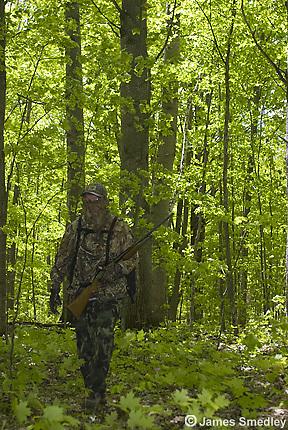 Wild turkey hunter in camouflage walking through forest
