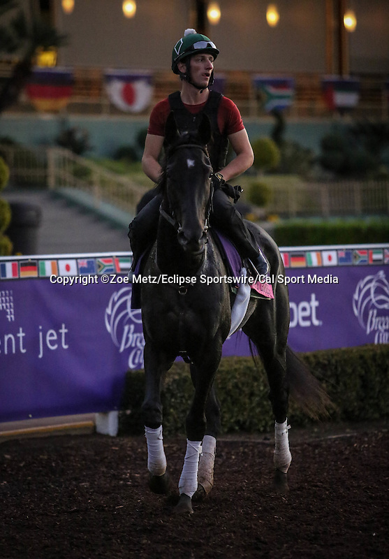 October 28, 2014: Quality Rocks exercises in preparation for the Breeders' Cup Juvenile Fillies Turf at Santa Anita Park in Arcadia, California on October 28, 2014. Zoe Metz/ESW/CSM