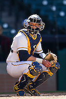 California Golden Bears catcher Andrew Knapp #5 watches for the sign during the NCAA baseball game against the Baylor Bears on March 1st, 2013 at Minute Maid Park in Houston, Texas. Baylor defeated Cal 9-0. (Andrew Woolley/Four Seam Images).
